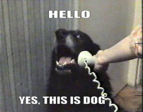 Hello_yes_this_is_dog